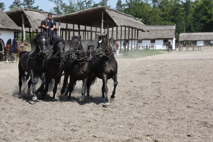 kep_horse_show